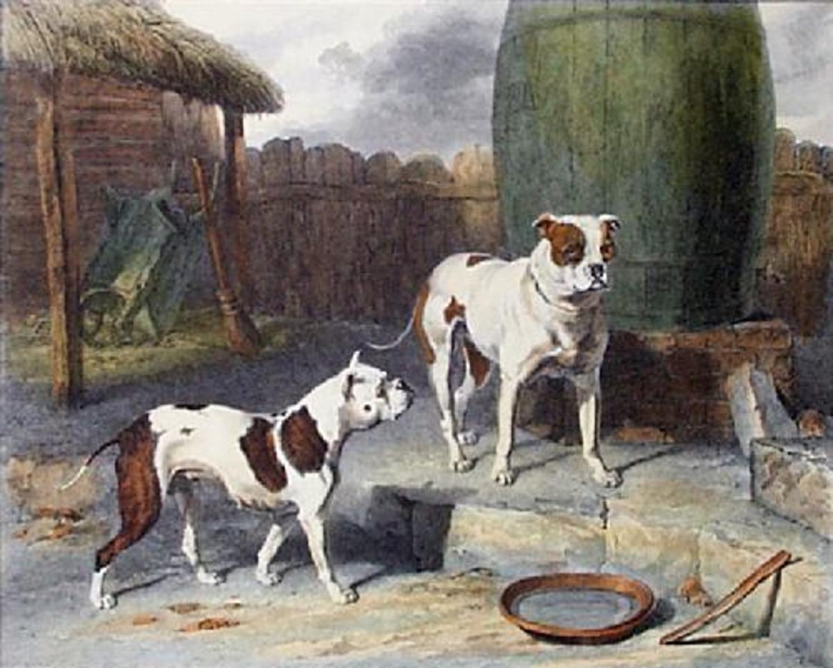 "Abraham Cooper's famous 1817 painting ""Crib and Rosa"" of the now extinct Old English Bulldog."