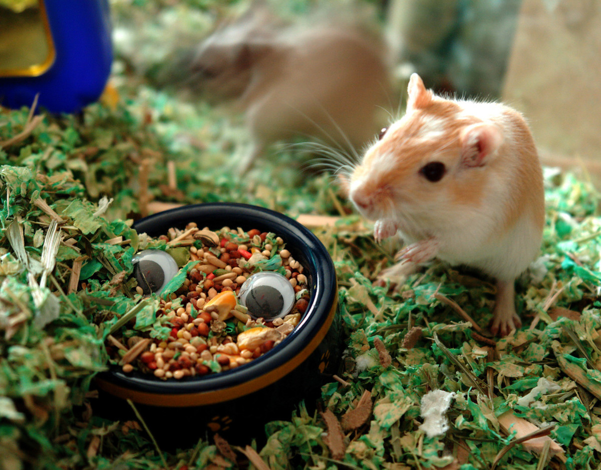 Don't overlook rodents because of their tails; they are cleaner than cats!