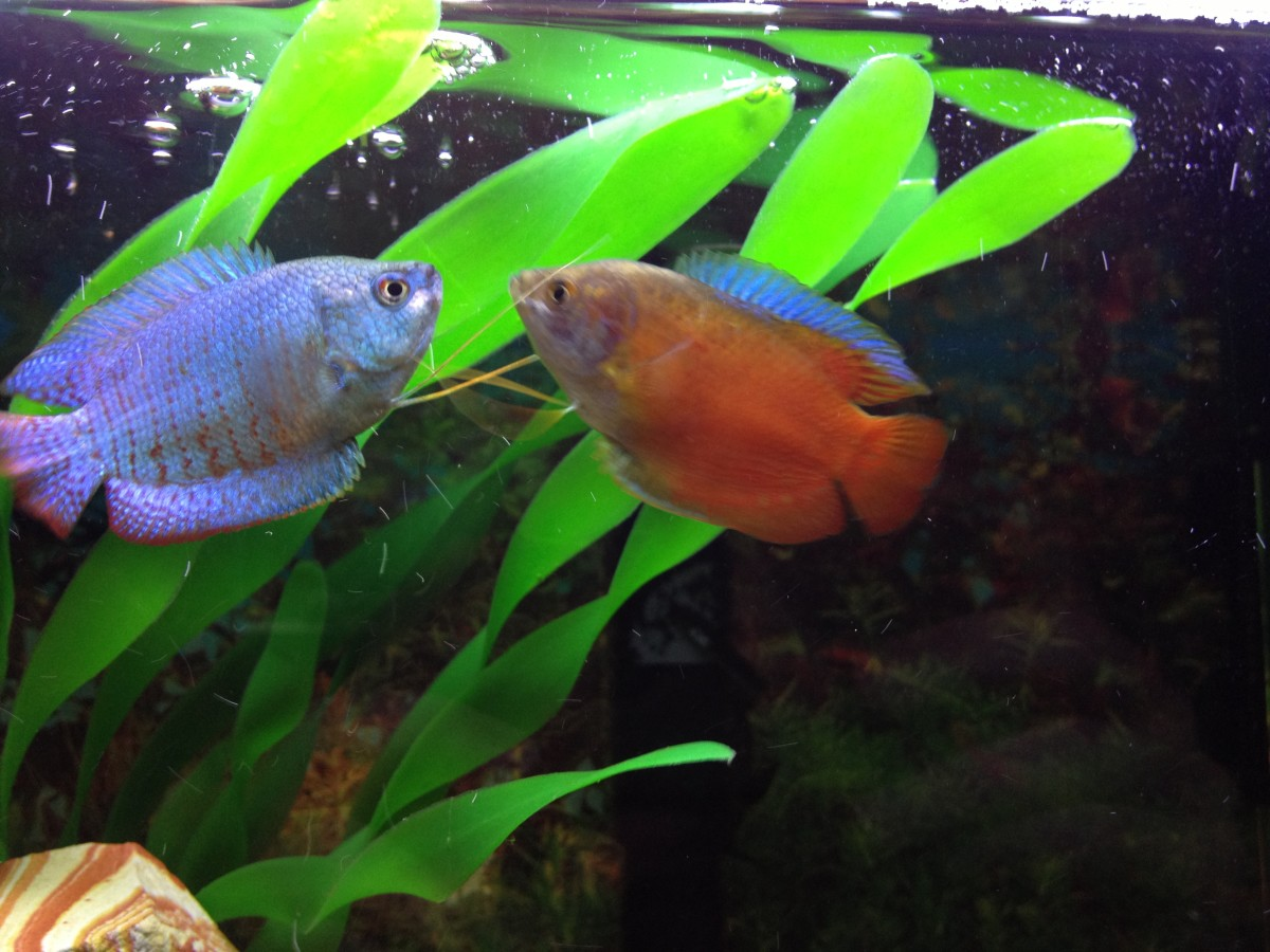 How to Wash Fish Tank Plants