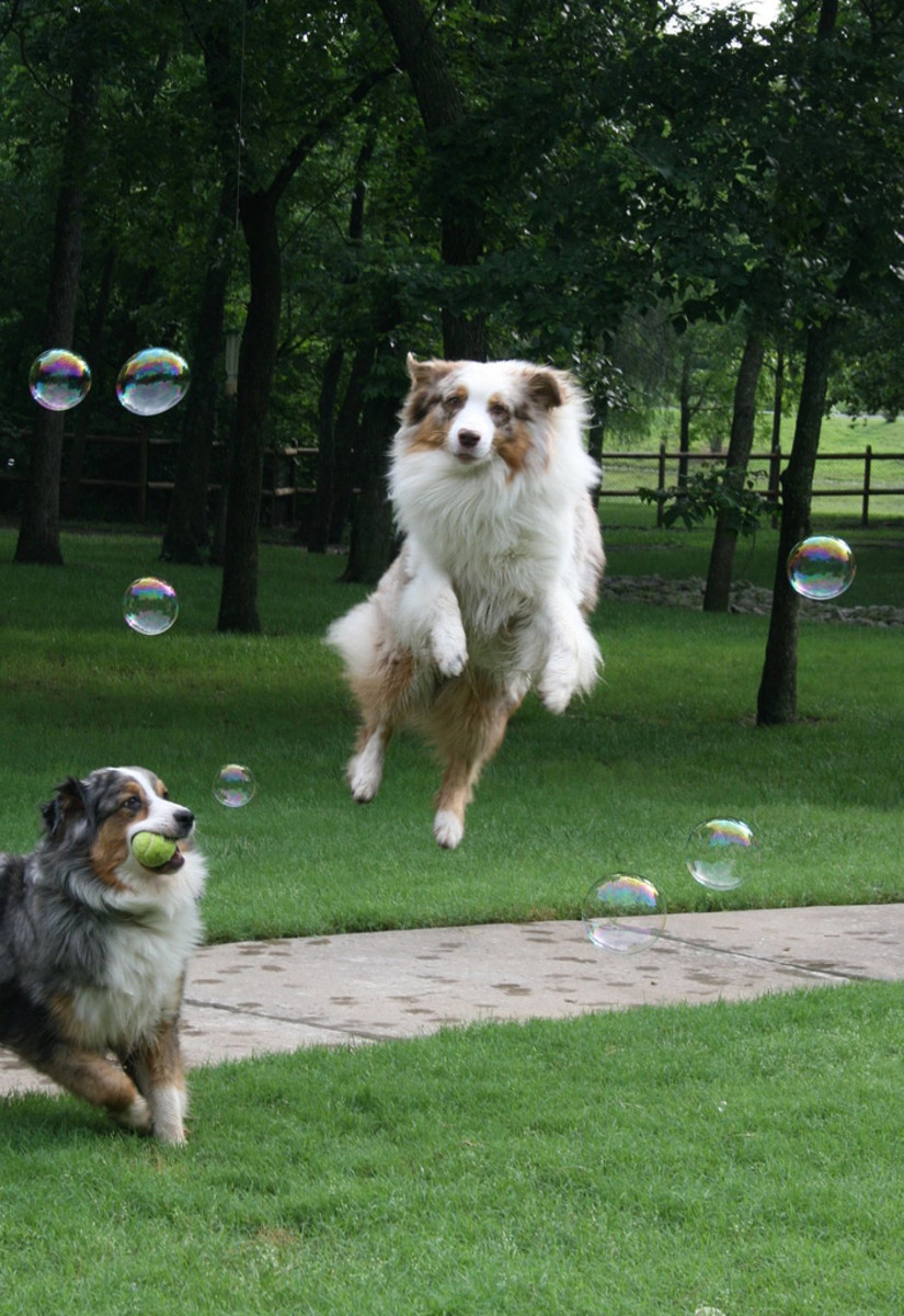 "Warning: Serving holistic dog food may cause them to have this euphoric idea of being ""Superdog!"""