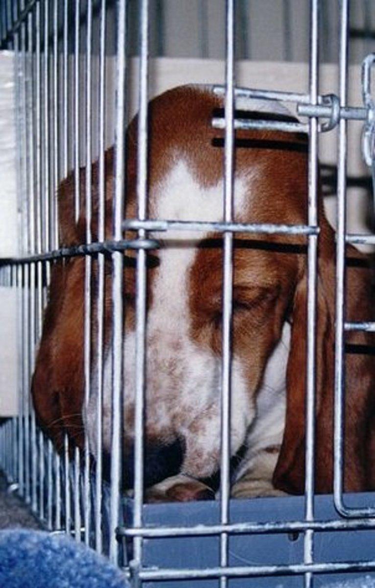 No dog deserves this treatment.