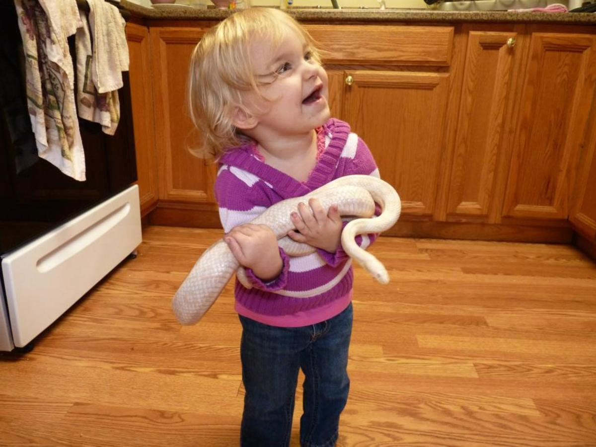 Our daughter with our adult snow corn snake.