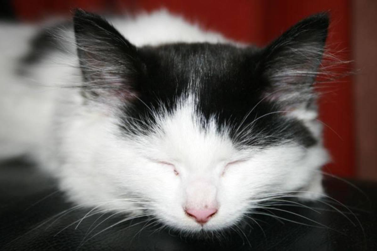Dippy as a Kitten.