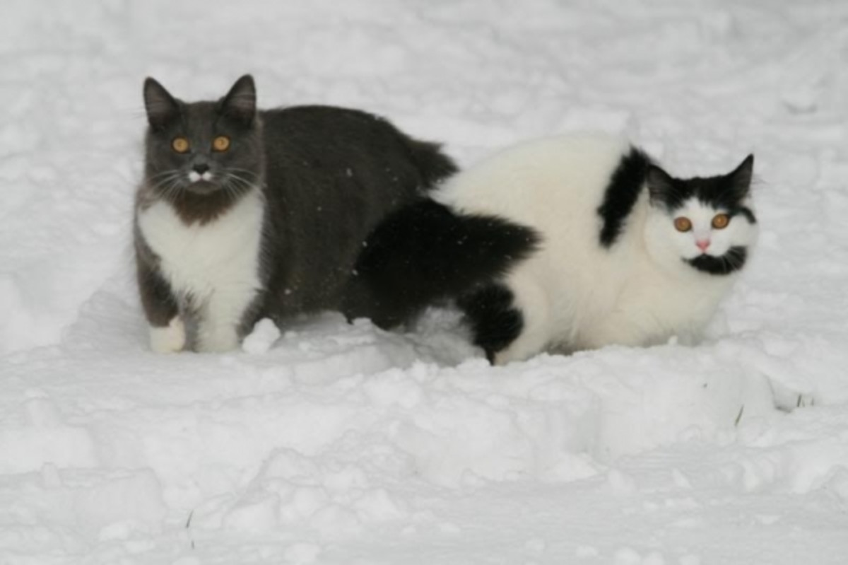 Greebo and Dippy explores the snow together.