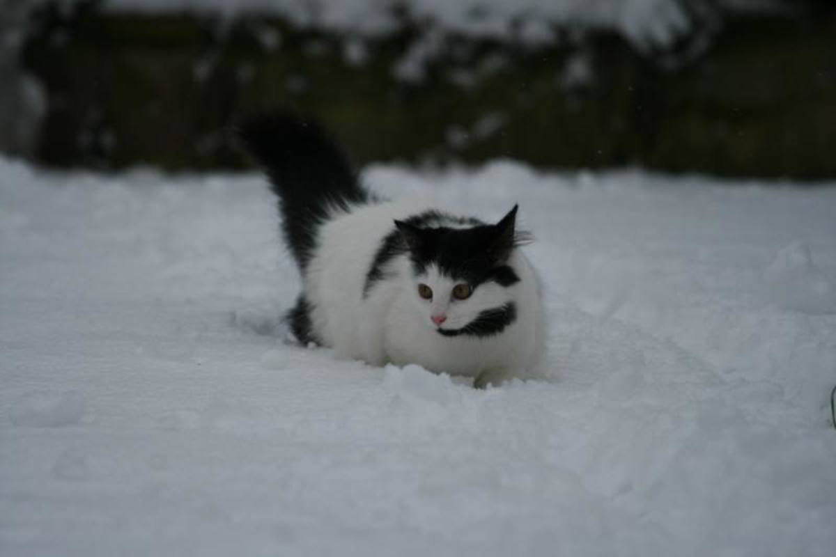 Dippy explores the snow.