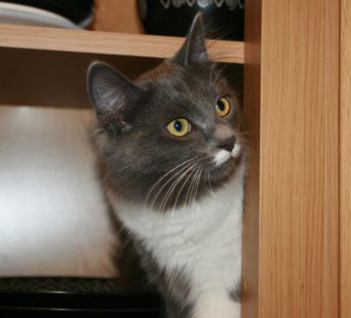 Greebo explores cupboards.
