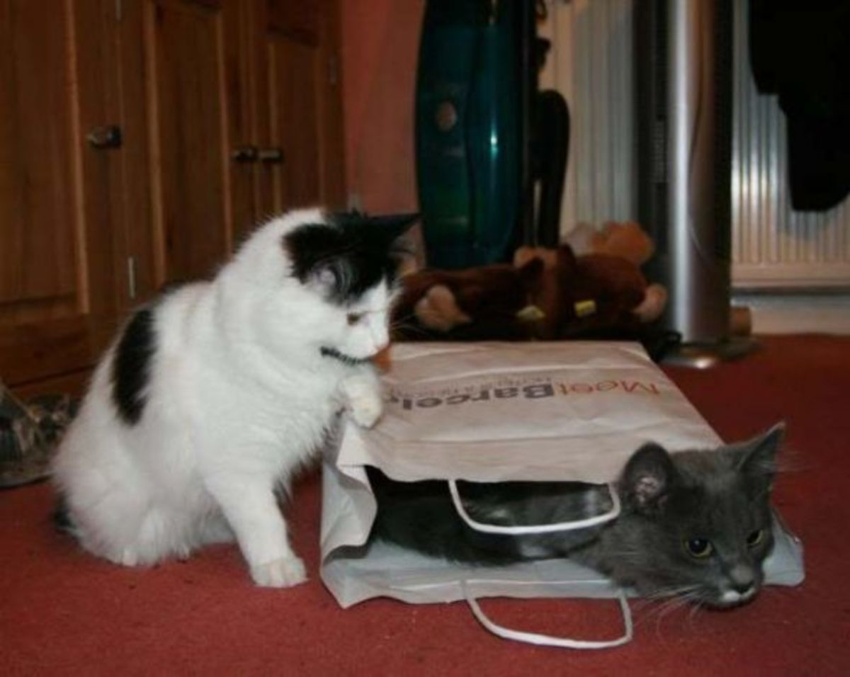 Greebo and Dippy playing together.