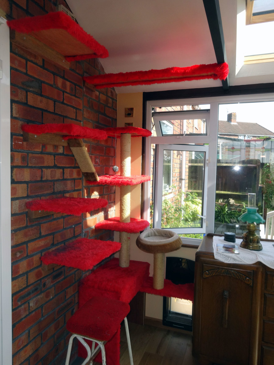 The cat tree was relocated to the conservatory and extended into a cats' highway; the top platform extends to the roof beam.