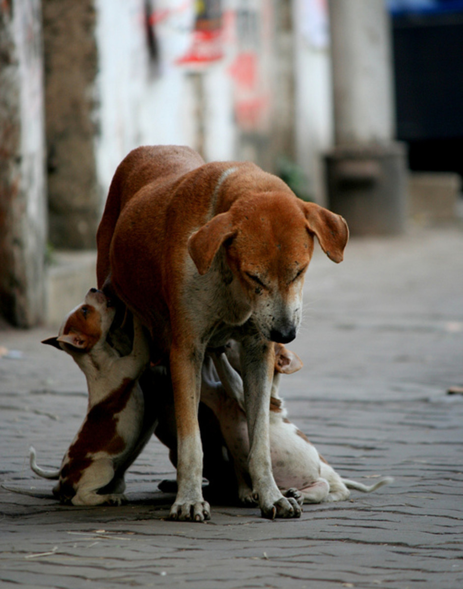 Stray dogs are likely to become infected at an early age because they are outside all of the time, but even inside dogs can become infected.