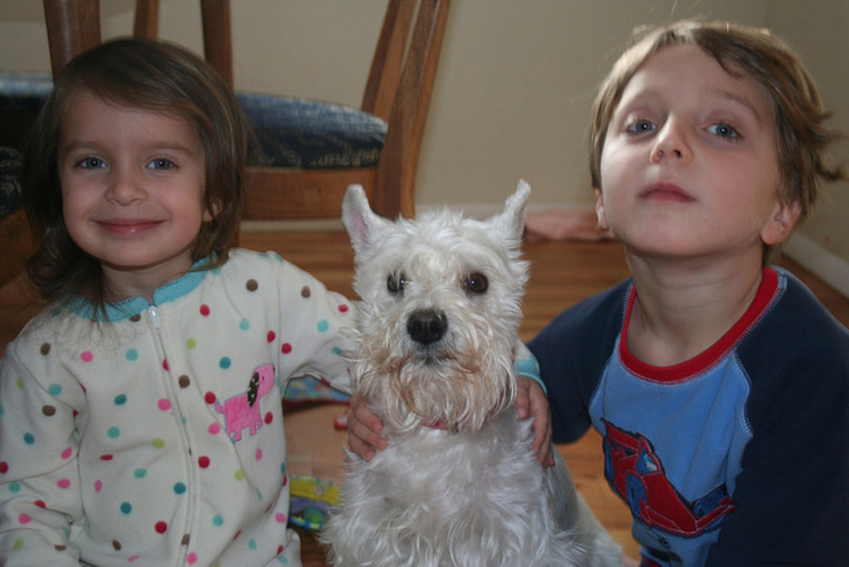 Miniature Schnauzers like kids. Cute white dogs do too.