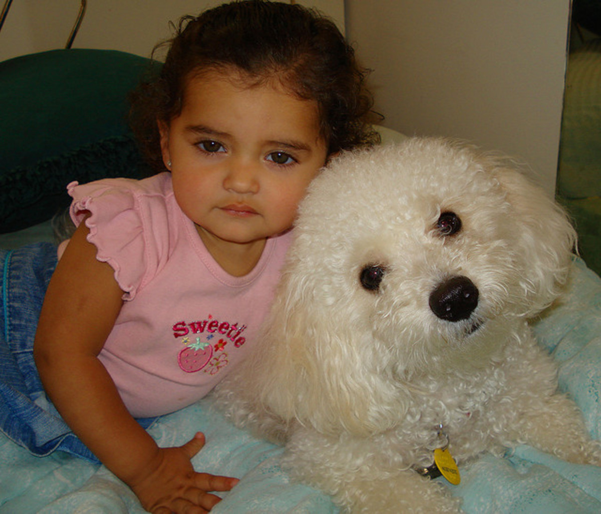 A Bichon with his pet kid.