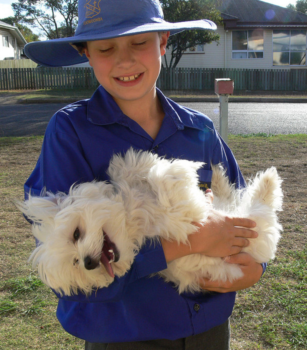 Maltese are not the best dog breed for kids..they are just the best!