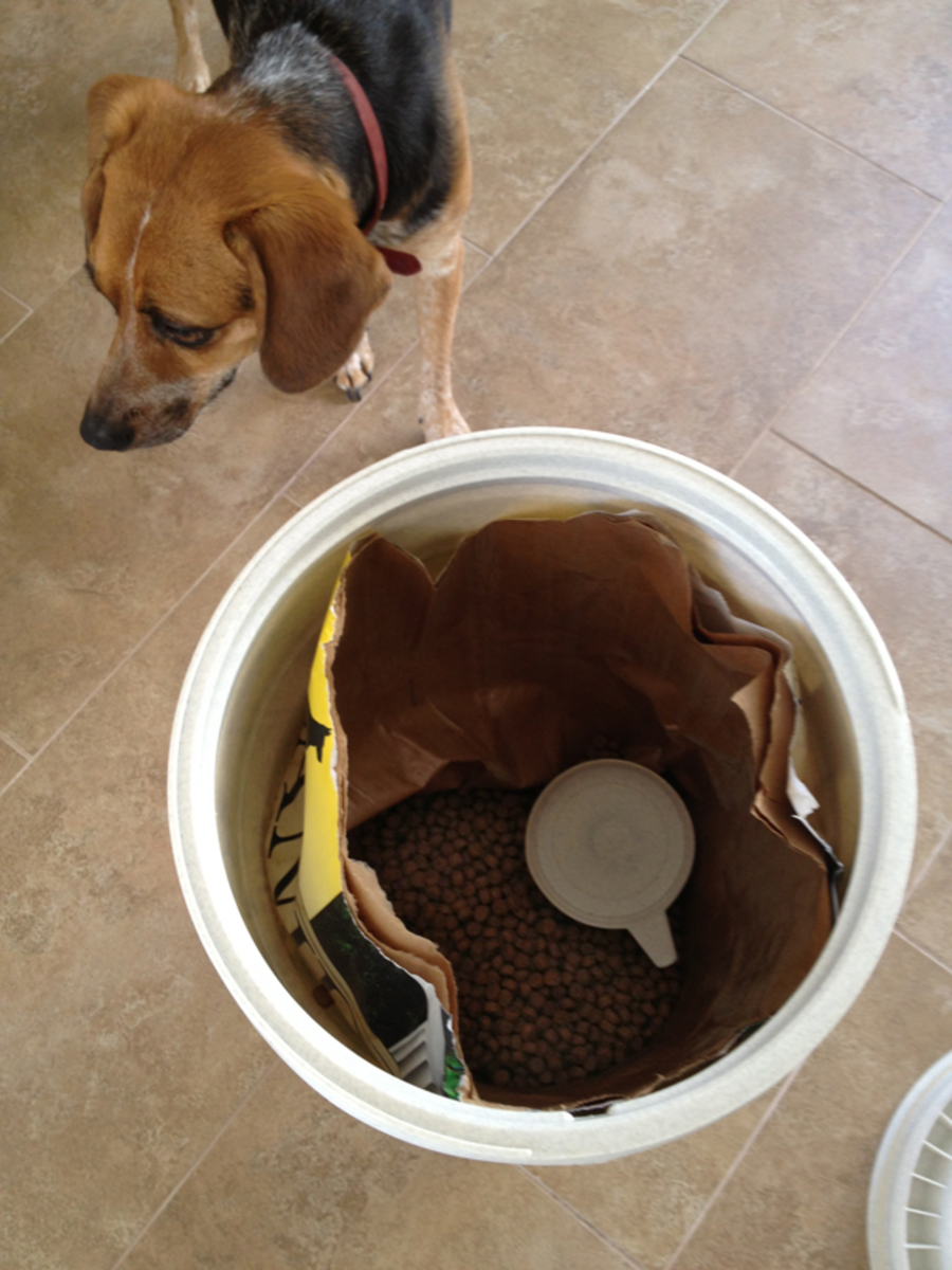"Penny's (now safe) dog kibble storage bin aka the ""Vittles Vault."""