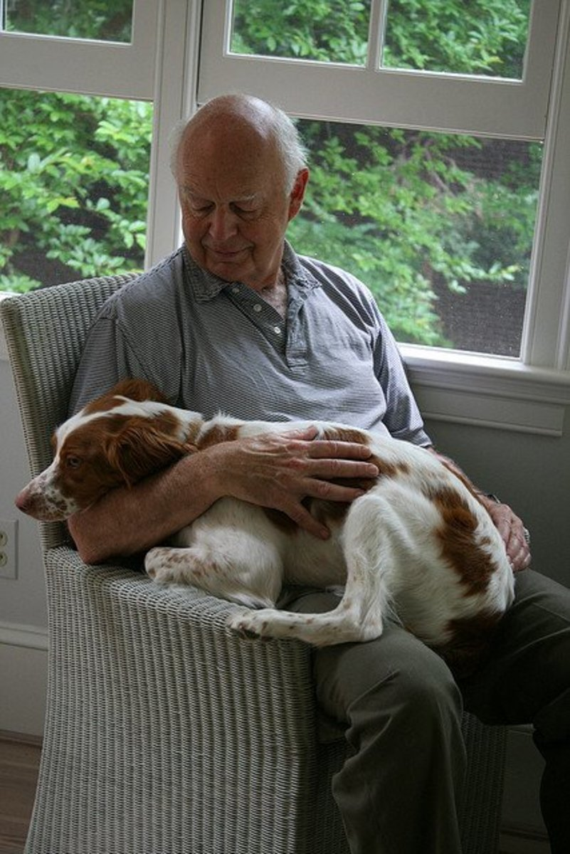 The Brittany is an affectionate dog.