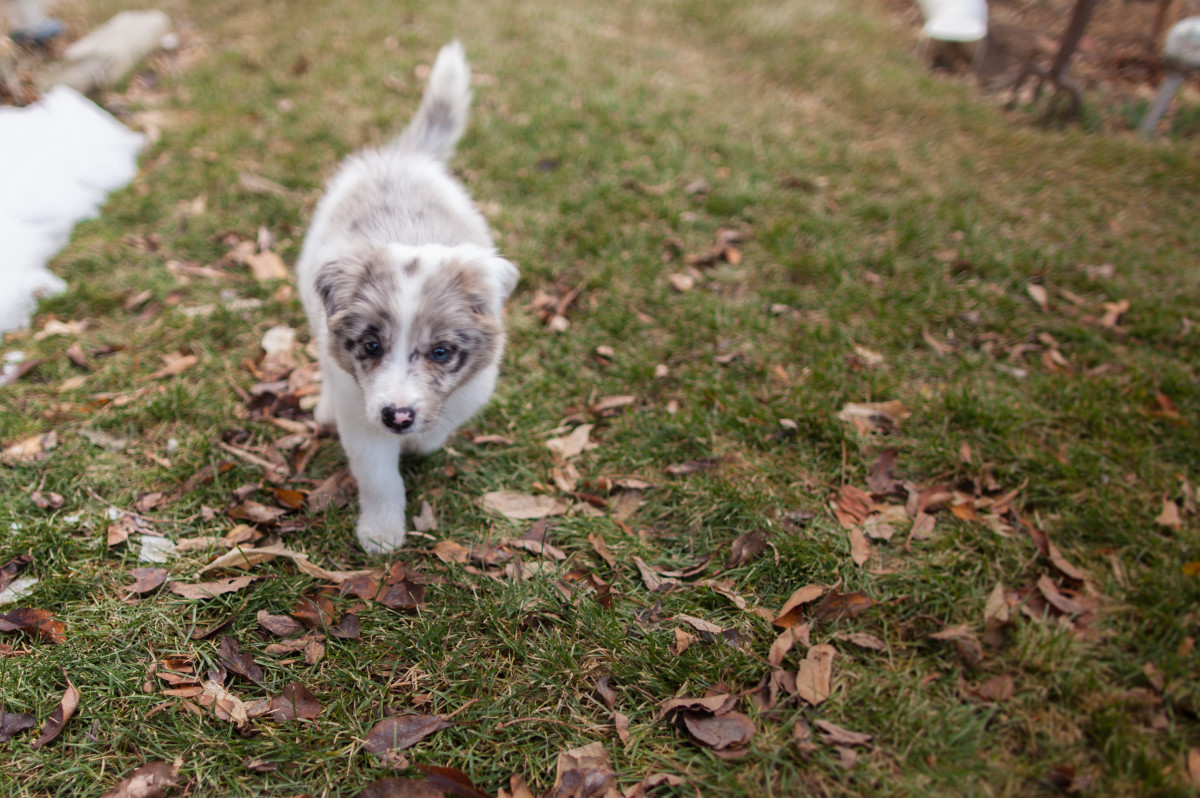 """What about """"Nova"""" for this puppy? It is Hopi for """"chases butterfly."""""""