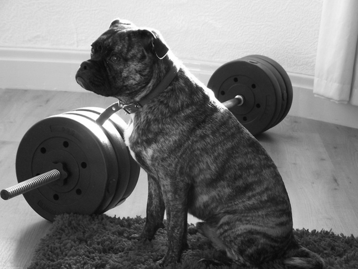 Tough dogs do not need to hang out at the gym and pump iron, but it helps.