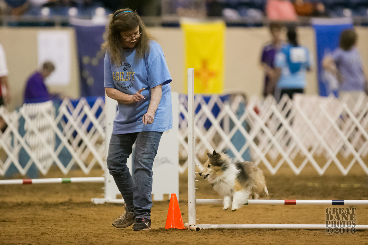 The author cuing a turn to her sheltie, Aslan.