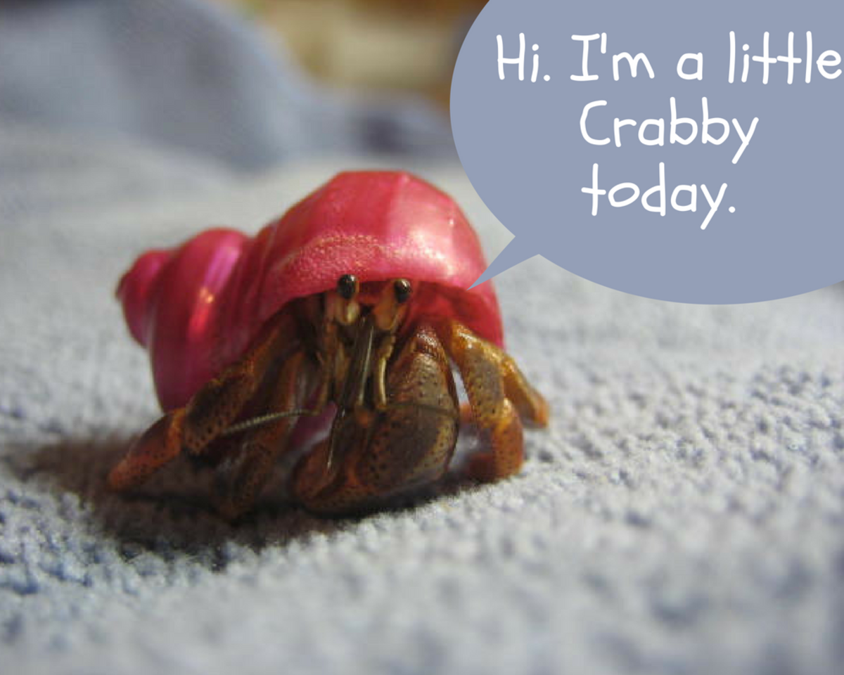Make sure to choose a name that fits your hermit crab's personality.