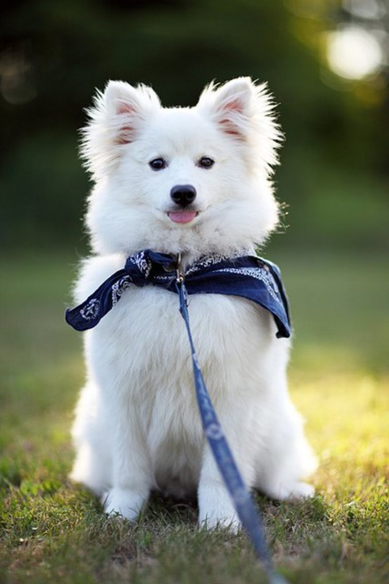 All white dogs are cute!
