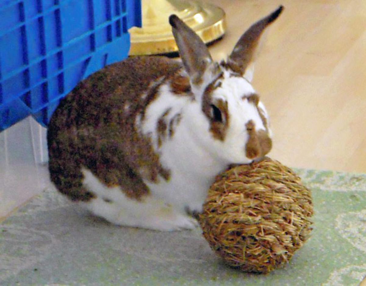 House rabbits like healthy fun toys, like timothy hay balls.