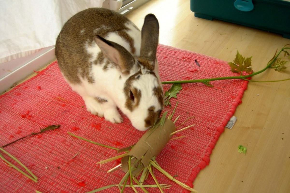 Make a toy with a toilet paper tube stuffed with hay. It will keep your bunny busy and entertained.