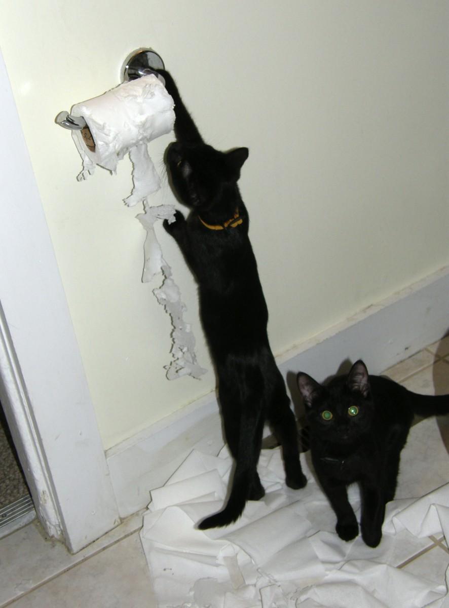 Black cats that deserve naughty names like Elvira and Nix