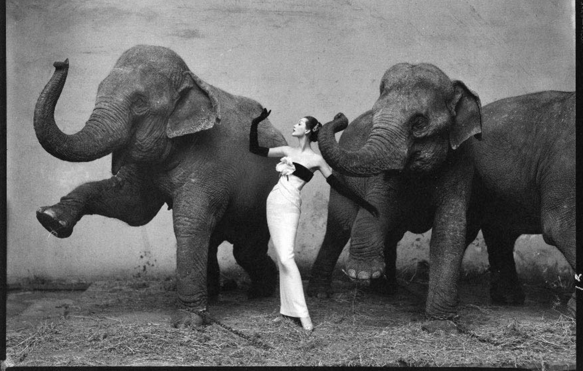 Dovima with elephants dressed as a Siamese cat; evening dress by Dior, Cirque d'Hiver, August 1955