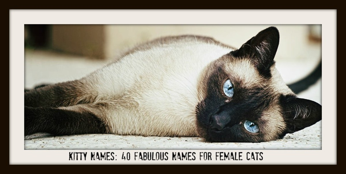 Kitty Names: 40 Fabulous Names For Female Cats