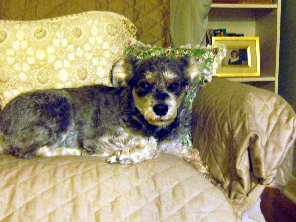 HGE:  a Dangerous Canine Intestinal Disease