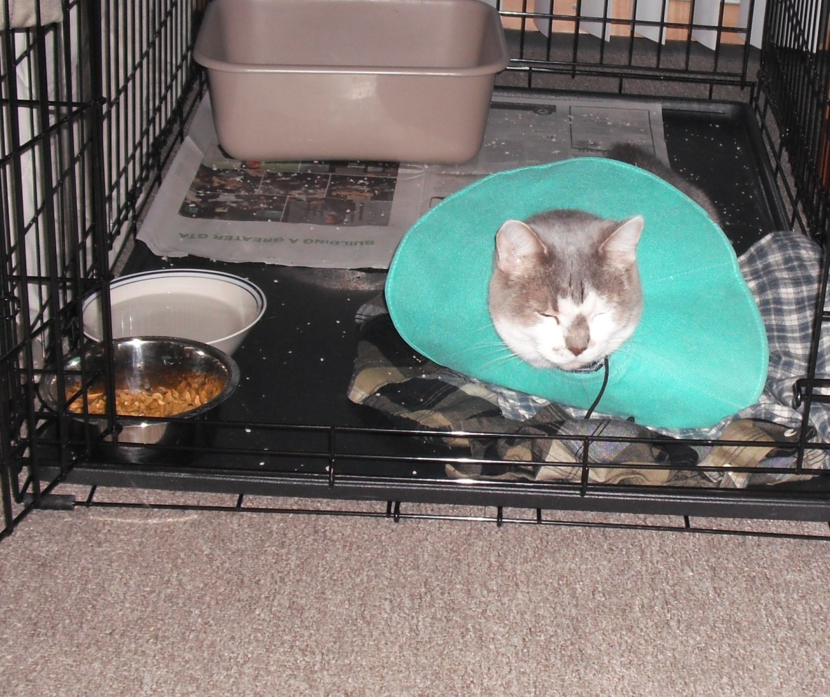 We switched to a soft cone that didn't interfere with eating so he could wear it all the time