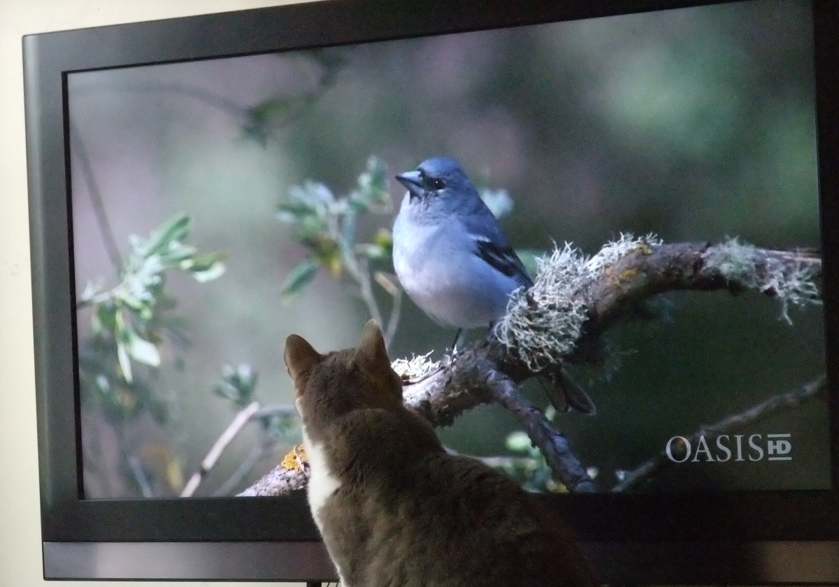 With high definition television, he now has an appreciation for the Nature Channel