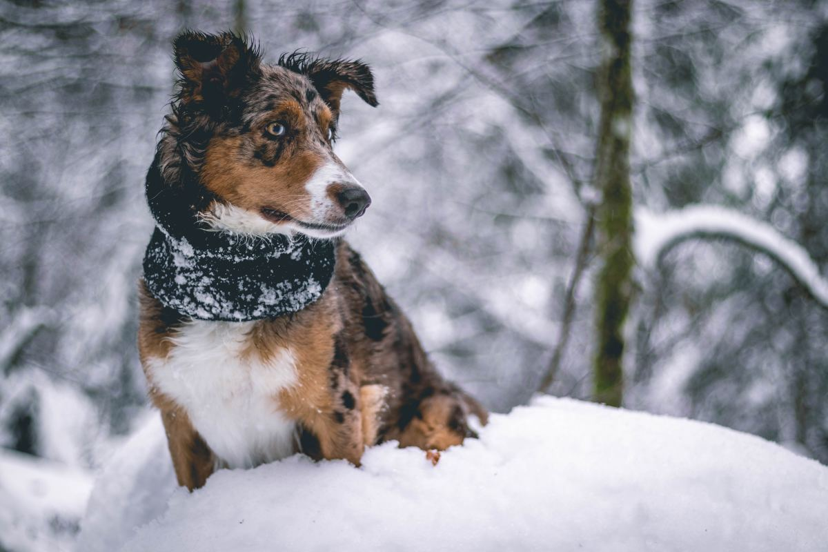 Dogs specialize in search-and-rescue and recovery techniques for the living and the deceased.