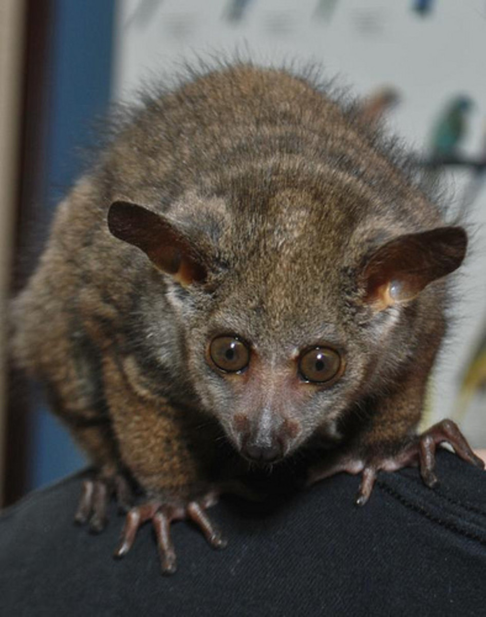 exotic-pets-people-want-but-cant-have