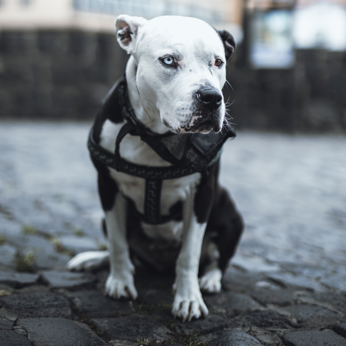 Learn how to train your dog to anticipate change.