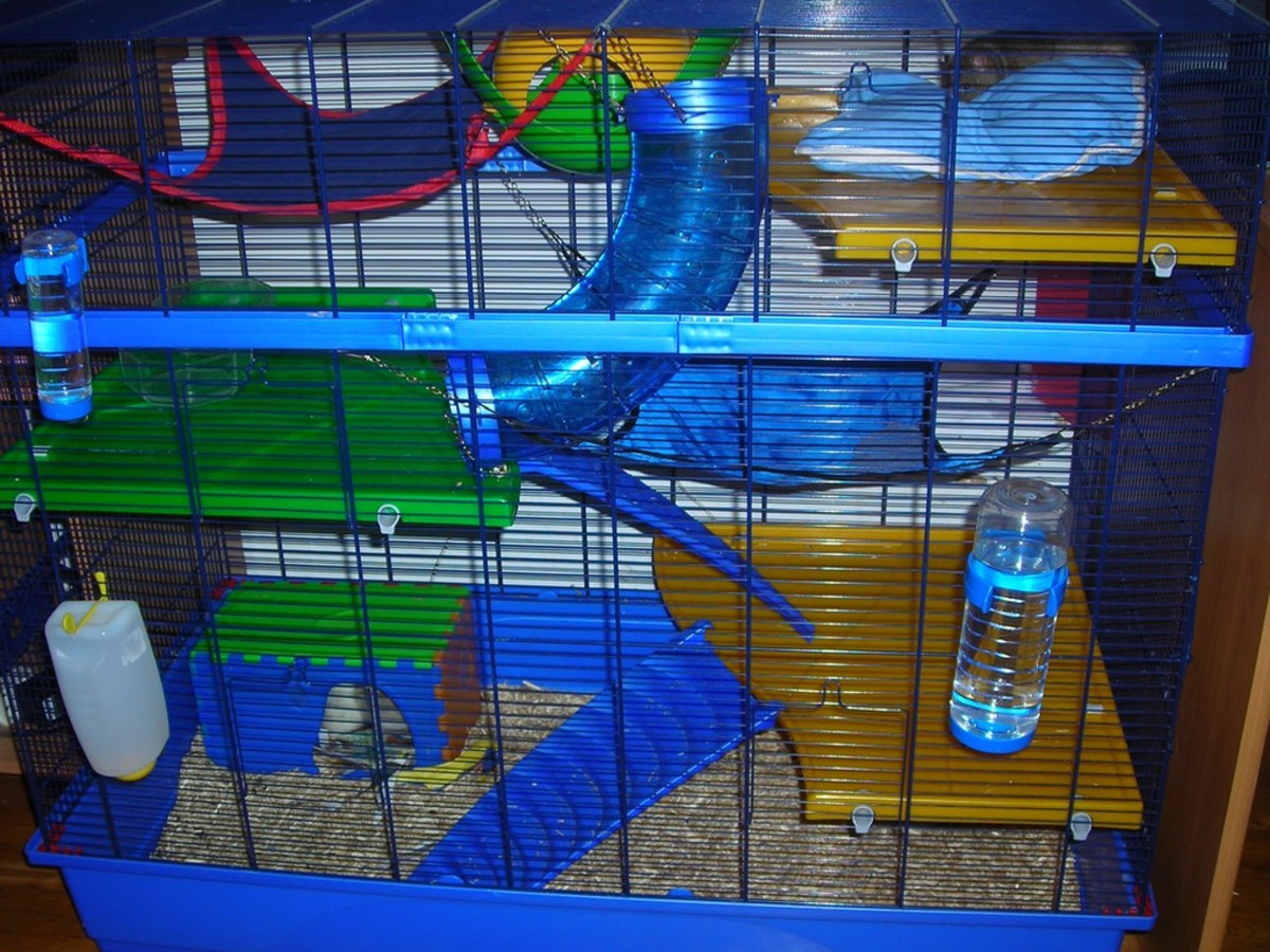A good pet rat cage should supply lots of space, levels, toys, entertainment, and hideaways.