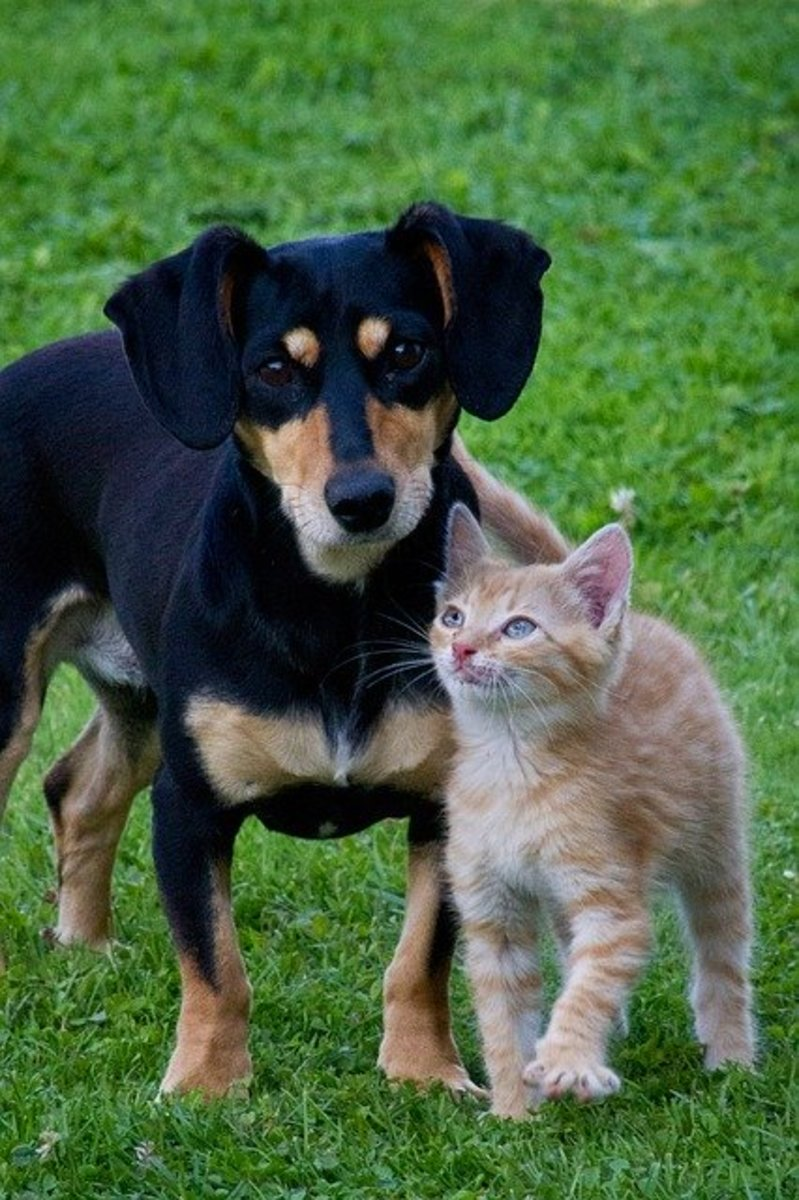 Find the flea treatment that fits your pet's needs and your budget.