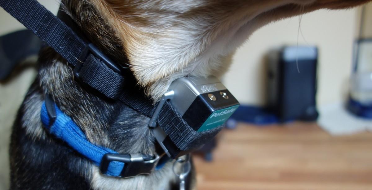 PetSafe Anti-Bark Spray collar. Best $35 I've ever spent...