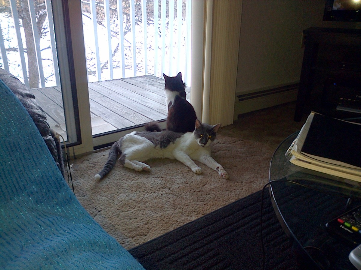 Cleo & Cia hang out by the window.