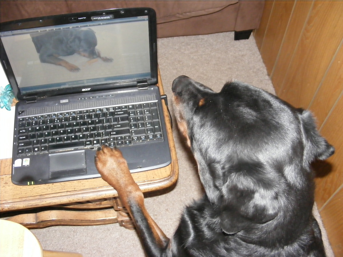 My male Rottweiler taking over my computer and spending my credit card online!