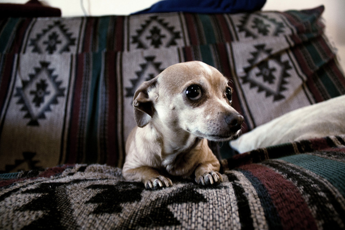 Many pet parents make an end of life decision because a pet has an incurable illness such as cancer and is suffering.