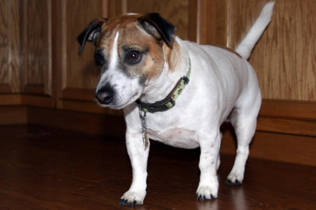 5 Ways to Ensure a Successful Dog Adoption