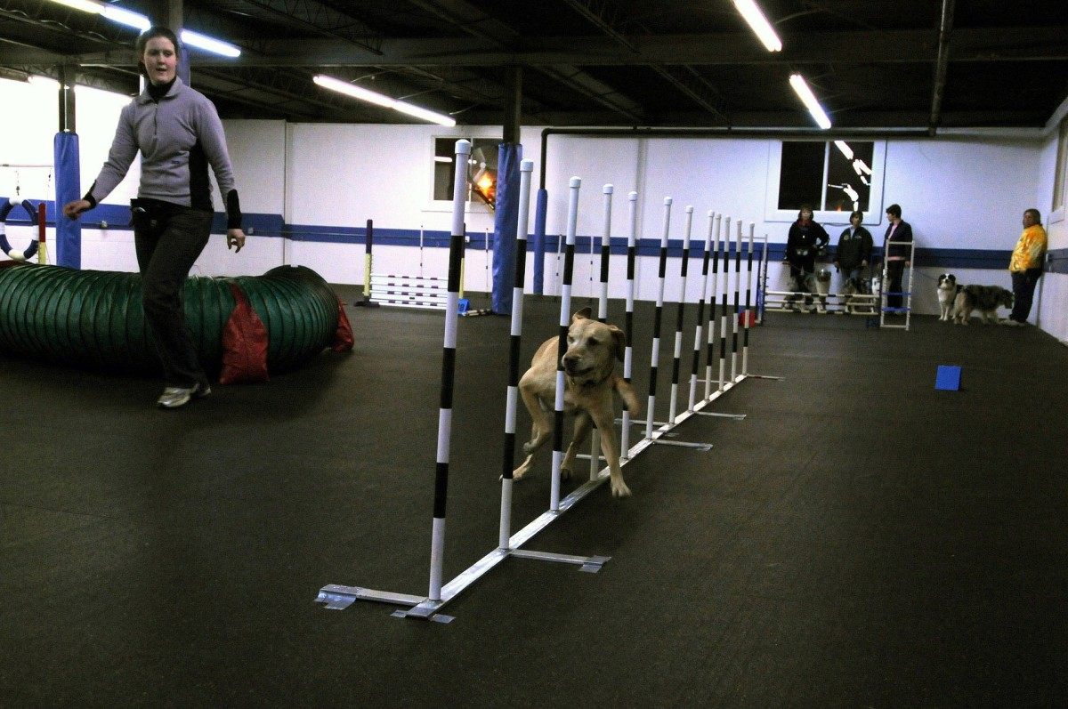 Agility is one form of training that's great for active dogs.