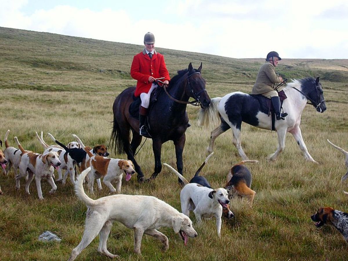 Scout and Blixen make Fun Names for Happy Hounds on the Fox Hunt
