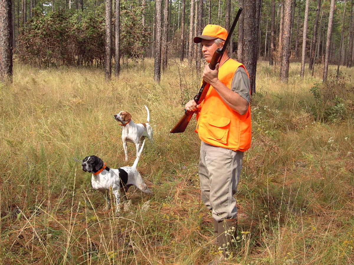Maya and Beatrix Are Cute Names for Pointers Hunting Quail