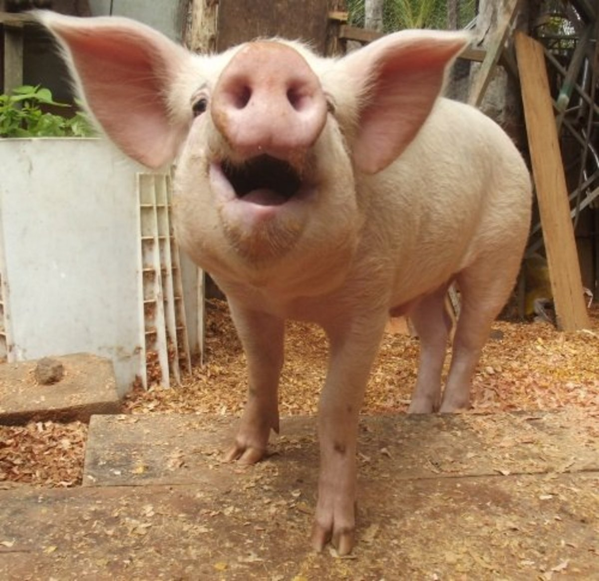 Be careful about using current celebrities--choose wrong and someone will accuse your dog of being named after a pig.