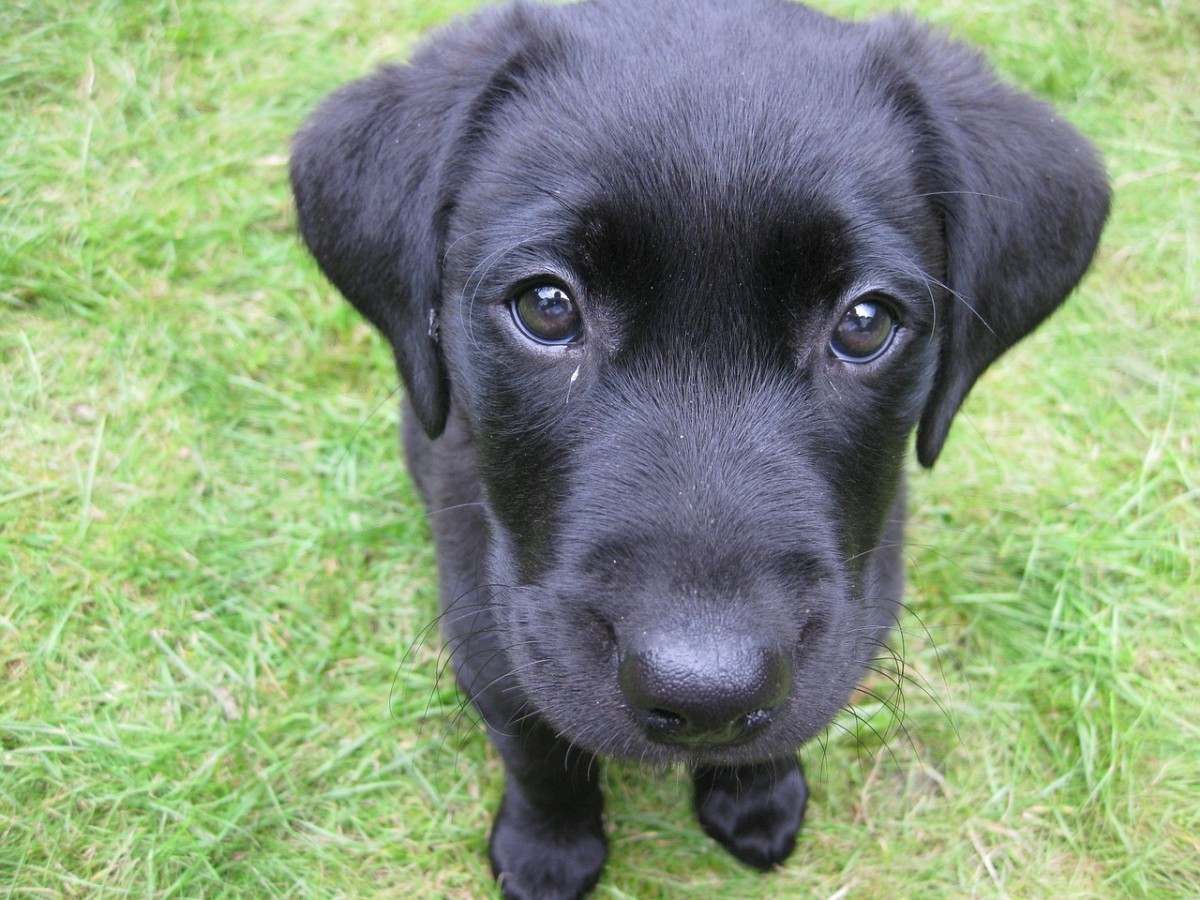 Puppies are cute- but not always too discerning!