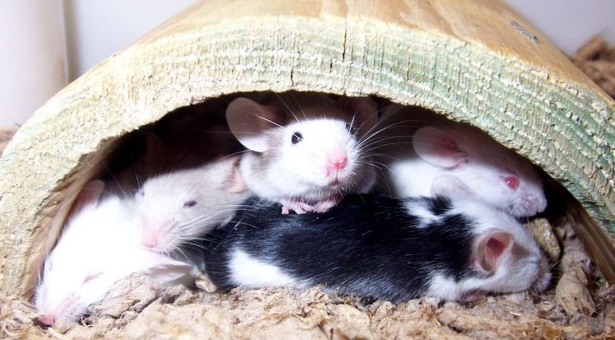 A group of mice napping in a log toy.