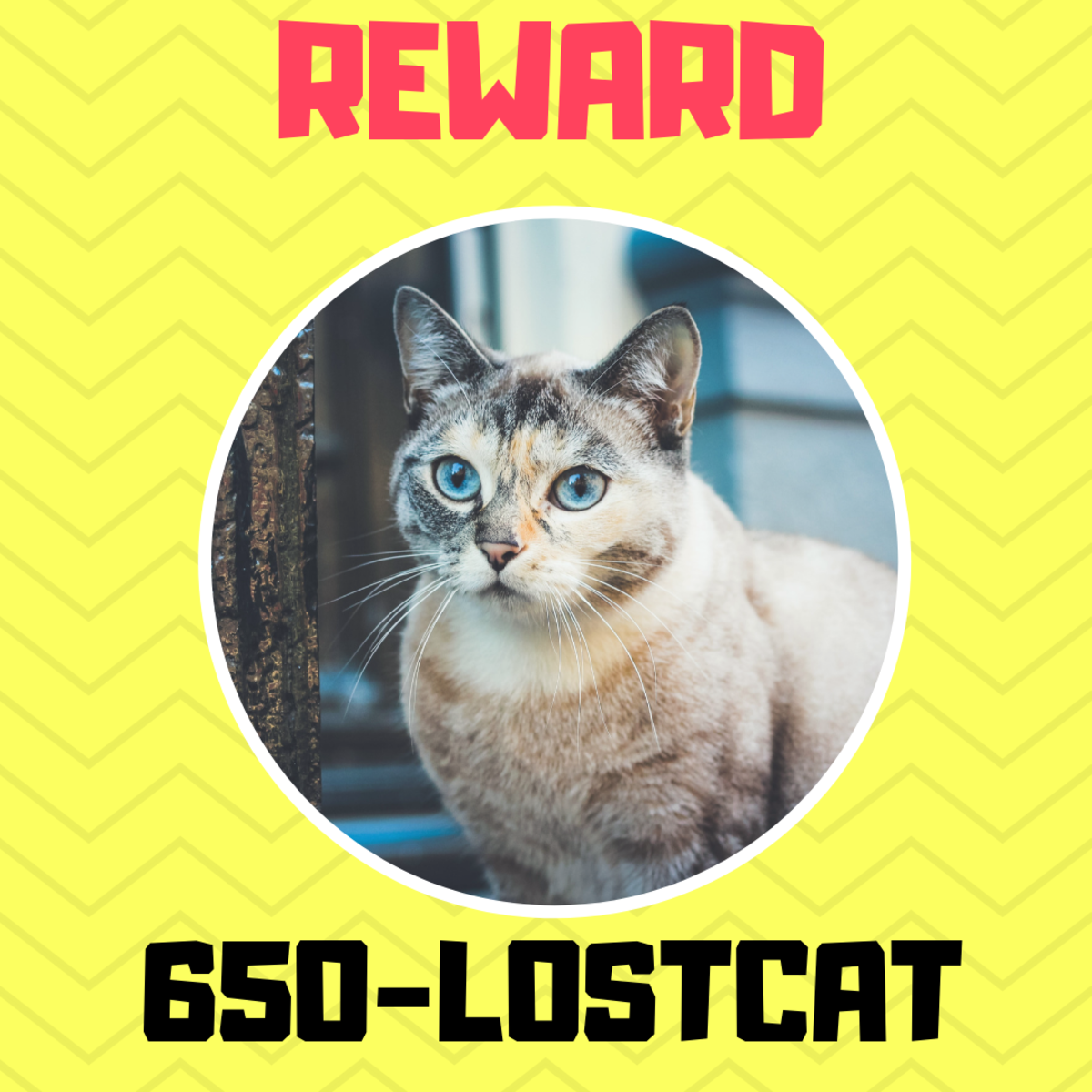 Example of a lost pet poster.