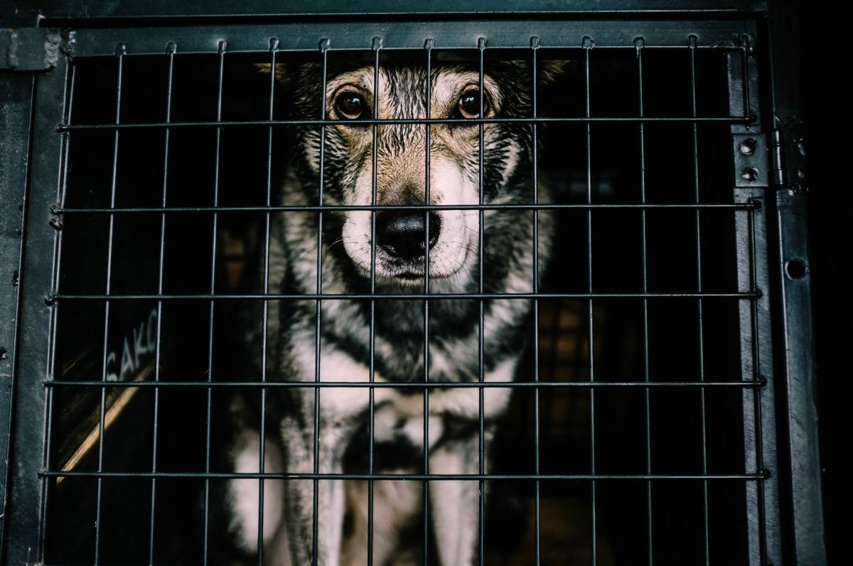 Go to the shelters in your area and do a visual scan of the animals they have on site.