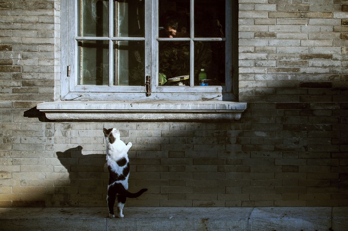 Your lost pet may be frequenting your home; consider a humane trap.